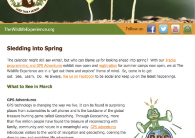 The Wildlife Experience Email Campaigns